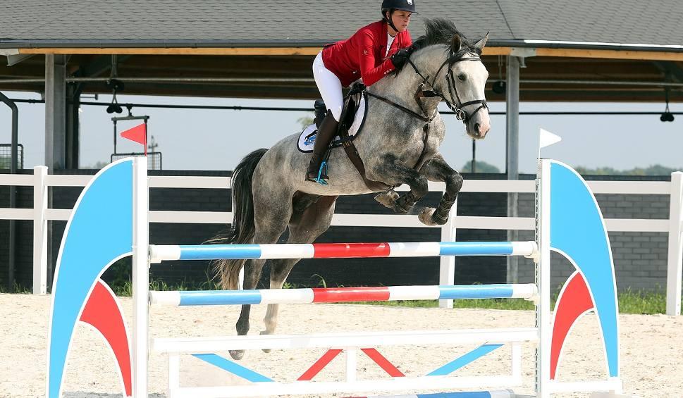Film do artykułu: Konie wskoczą na stadion. W lipcu Sedina Horse Show [wideo, zdjęcia]