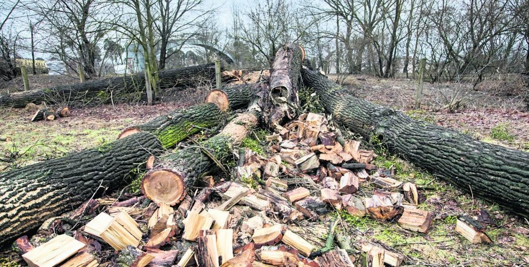 Dłużnicy najczęściej są zatrudniani do Prac porządkowych np. zbierania drewna po wycince drzew