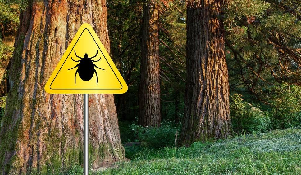 Film do artykułu: Sezon na kleszcze już trwa! Sprawdź, jak skutecznie chronić się przed ugryzieniami tych pasożytów i przenoszonymi przez nie chorobami