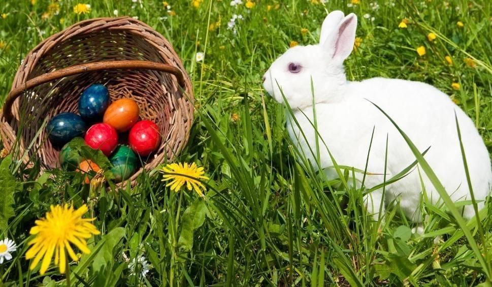 Film do artykułu: W Wielkanoc pamiętaj o zajączku i spraw innym radość