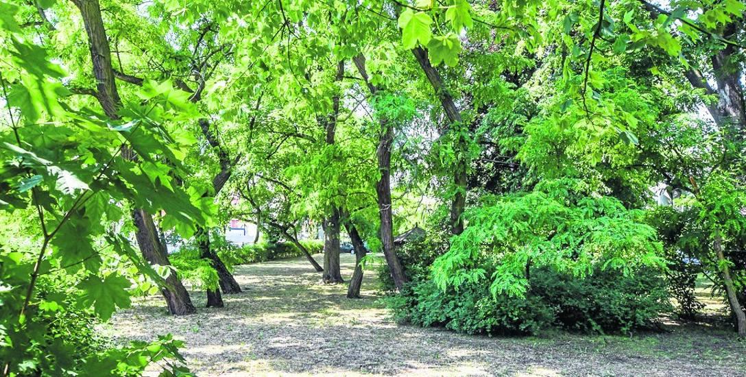 Okazały park w stylu angielskim założony w 1860 roku na zapleczu willi, będącej dziś siedzibą Izby Administracji Skarbowej, jest dla zwykłych śmiertelników