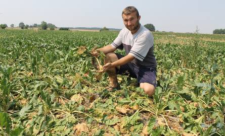 Opolscy rolnicy, którym dopiekła susza, chcą pomocy