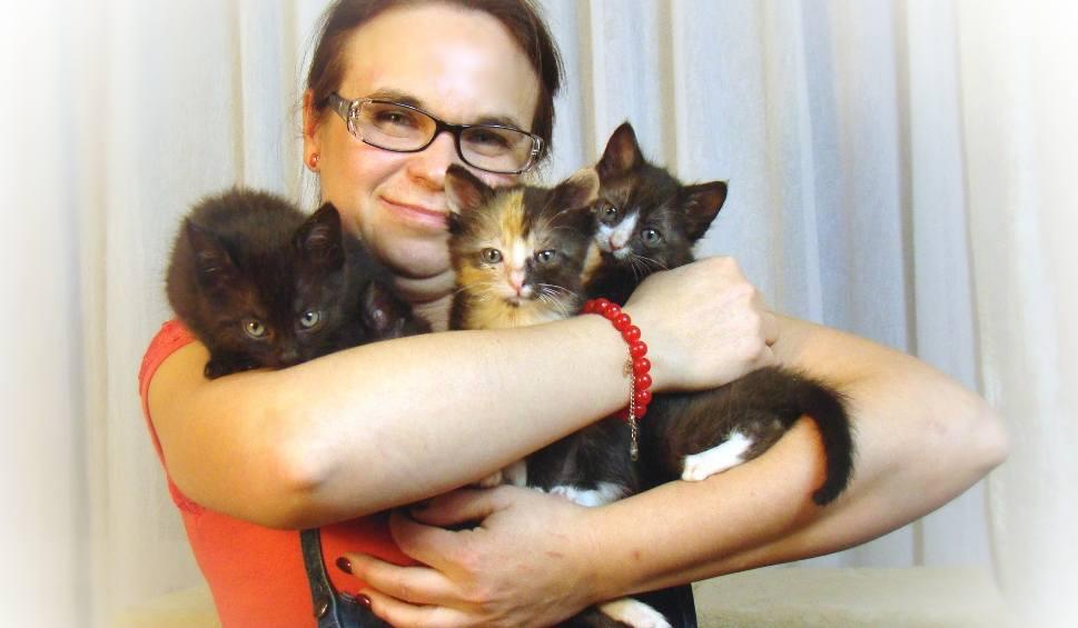 Film do artykułu: Dom tymczasowy dla kotów to nie tylko przechowalnia - mówi Ewa Głogowska z Żor ZDJĘCIA