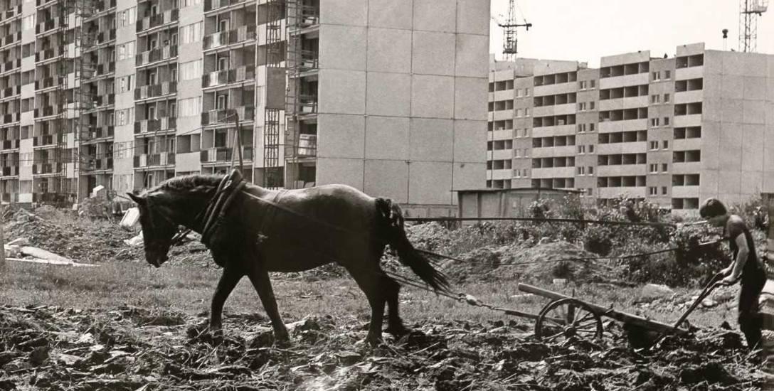 W takiej scenerii powstawało rzeszowskie osiedle Nowe Miasto, 1981 r.