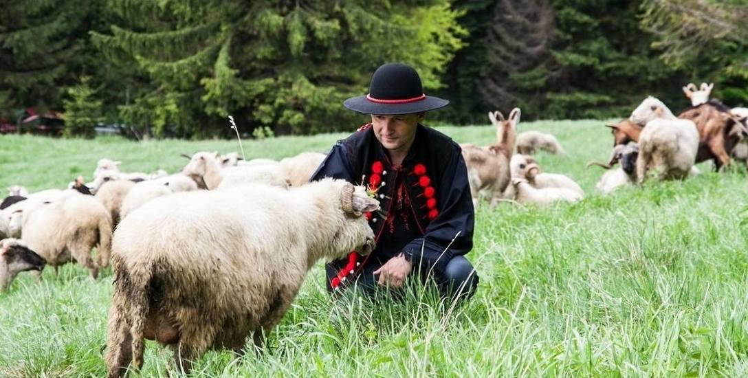 Kto ma owce, ten ma co chce