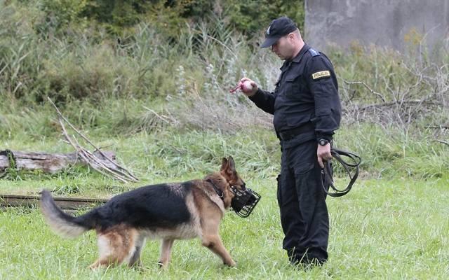 Fantastyczny psy policyjne Szczecin - gs24.pl RM06