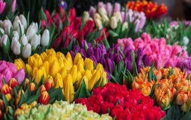 Kolory kwiatów mają znaczenie. Warto wiedzieć jaki kolor podarować bliskiej osobie, aby wyrazić swoje uczucia. Wyjaśniamy, co oznaczają poszczególne