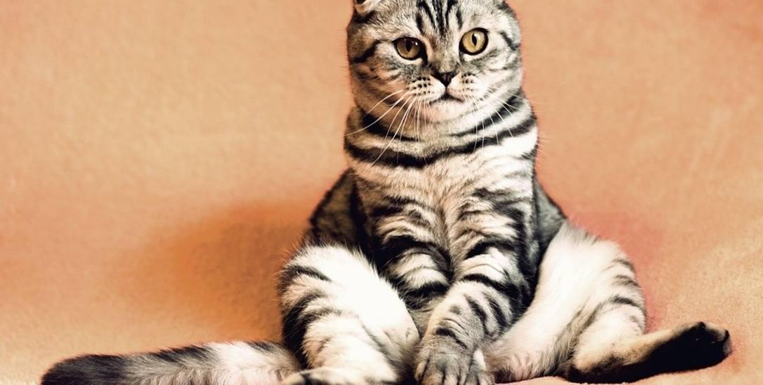 Nawet kot, który nigdy nie wychodzi z domu, może się przeziębić