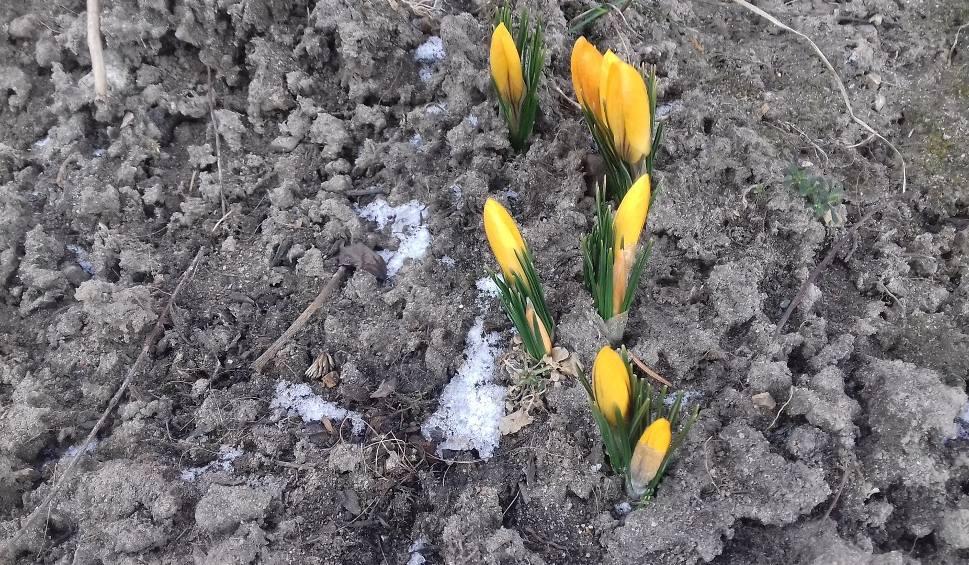 Film do artykułu: Pierwszy dzień wiosny mroźny, a miejscami śnieżny. Ma być jednak cieplej