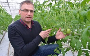 Pierwsze pomidory dojrzewają w doskonałych warunkach - mówi pan Dariusz.