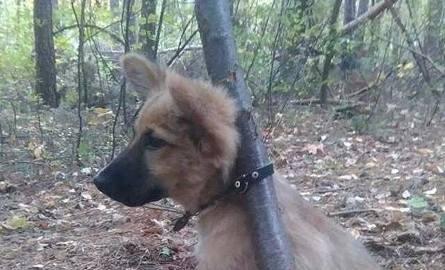 Przywiązali psa do drzewa w lesie. Policjanci znaleźli ich dzięki portalowi społecznościowemu