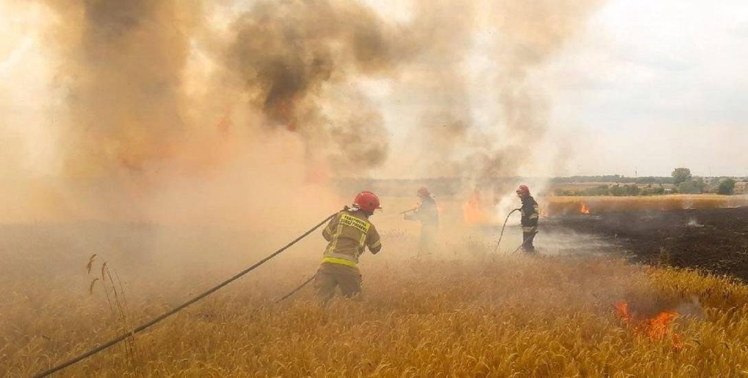 Płoną zboża na polach, rolnicy i strażacy ratują uprawy