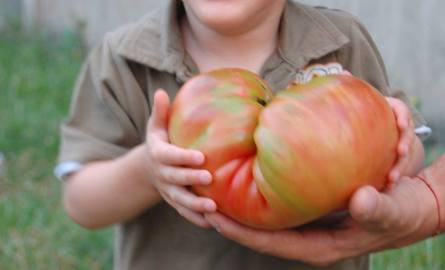 Jasia ogromnie ucieszył gigantyczny pomidor.