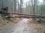 Powalone drzewa w Dolinie Strążyskiej