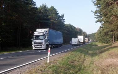 Droga ekspresowa S10 Bydgoszcz – Toruń kontra las i jego mieszkańcy [21.10.2020 r]
