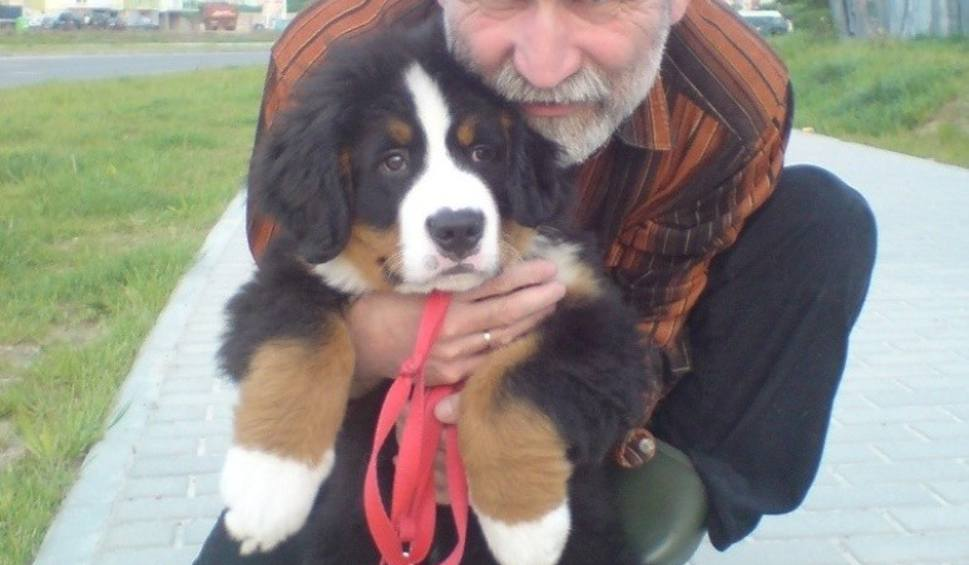 Berneński Pies Pasterski To Kochany łagodny Misiak Gazetalubuskapl
