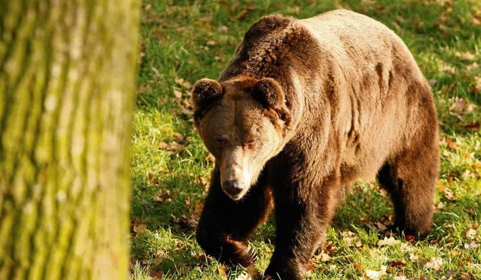 Film do artykułu: Tatry: Uwaga, niedźwiedzie! Zwłaszcza na Słowacji