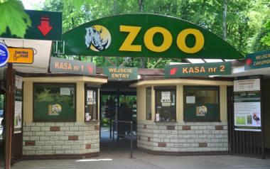Strefa zagrożenia wścieklizną to duży problem dla funkcjonowania wielu poznańskich instytucji. Zoo w Poznaniu zmuszone jest odwoływać ważne transporty