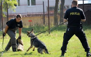 W podlaskiej policji służy 58 psów, o których dba 41 przewodników