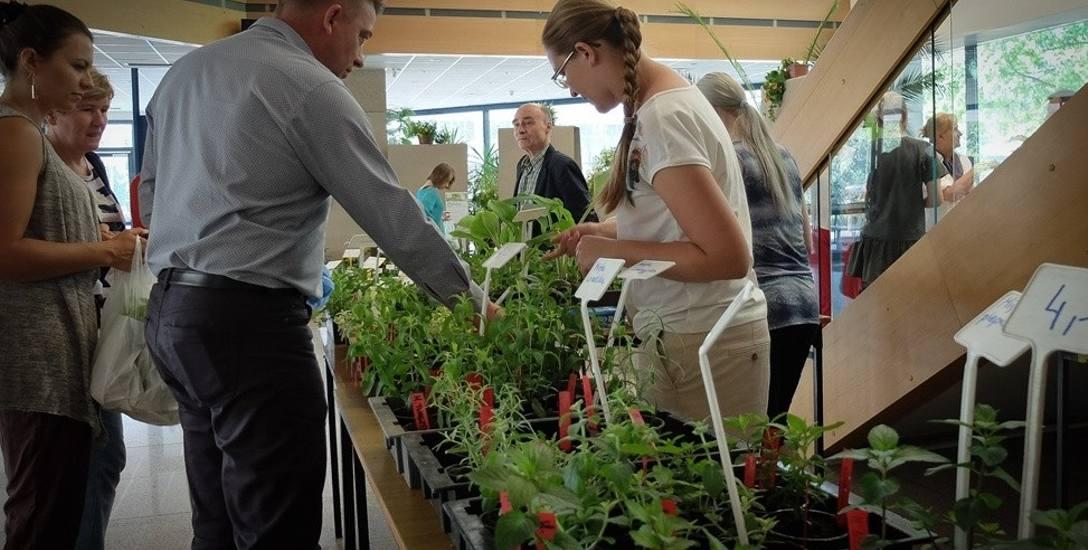 Kaktus na wakacjach: w ogrodzie albo na balknie