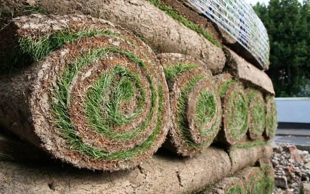 Trawa w rolce to najszybszy sposób na założenie trawnika. Trzeba to jednak robić z głową, by efekt był zadowalający.