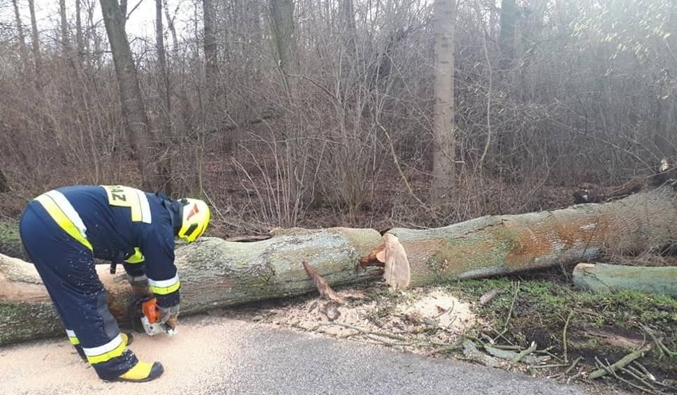 Film do artykułu: Powiat ostrołęcki. Mocno wiało. Strażacy usuwali drzewa powalone na drogi. 2.02.2020 [ZDJĘCIA]