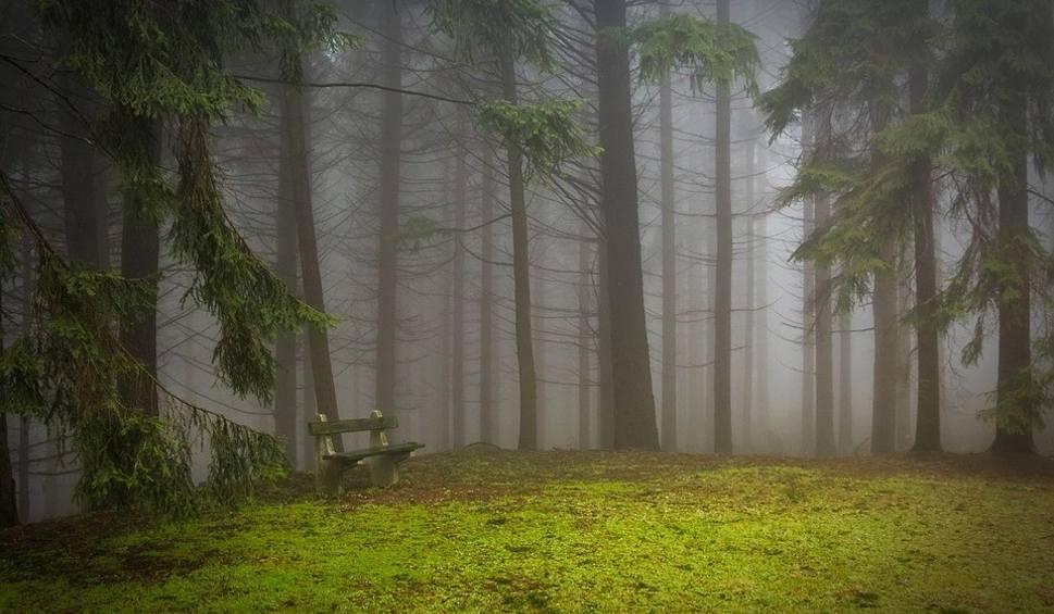 Film do artykułu: Jaka będzie pogoda w sobotę, 10 listopada 2018 (10.11.2018)? Mgła i zachmurzenie, ale dość ciepło [prognoza pogody, wideo]