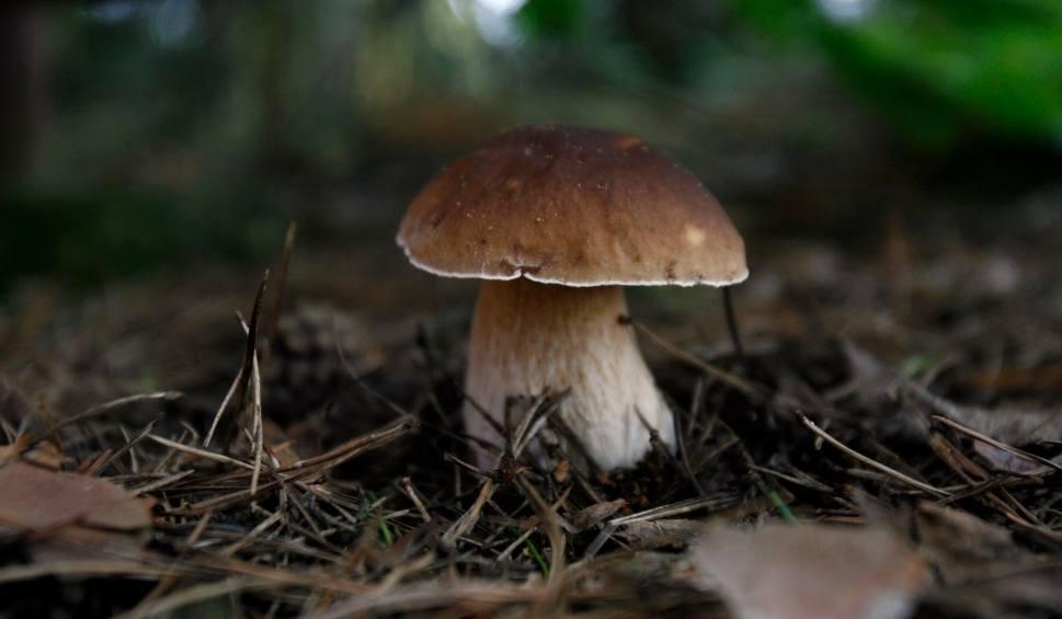 Film do artykułu: Pogoda szaleje. W lasach pojawiły się grzyby! Najnowsza prognoza długoterminowa