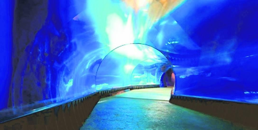 Partnerem miasta w budowie oceanarium ma być prywatna firma