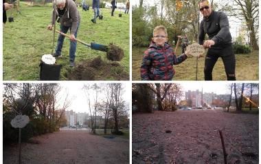 Podczas wspólnej akcji sadzenia drzew posadzono ich 70. Teraz część zniknęła na dobre. Ale nie z powodu przeoczenia czy niedbałości urzędników