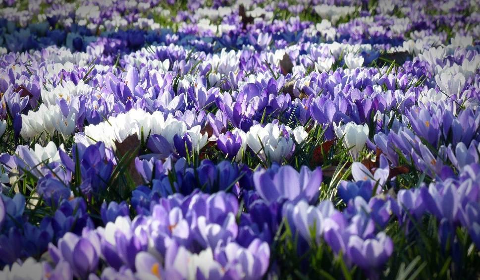 Film do artykułu: Pierwszy dzień wiosny 2020. Kiedy nastąpi kalendarzowy i astronomiczny początek wiosny? Kiedy przyjdzie wiosna? Pogoda na wiosnę!