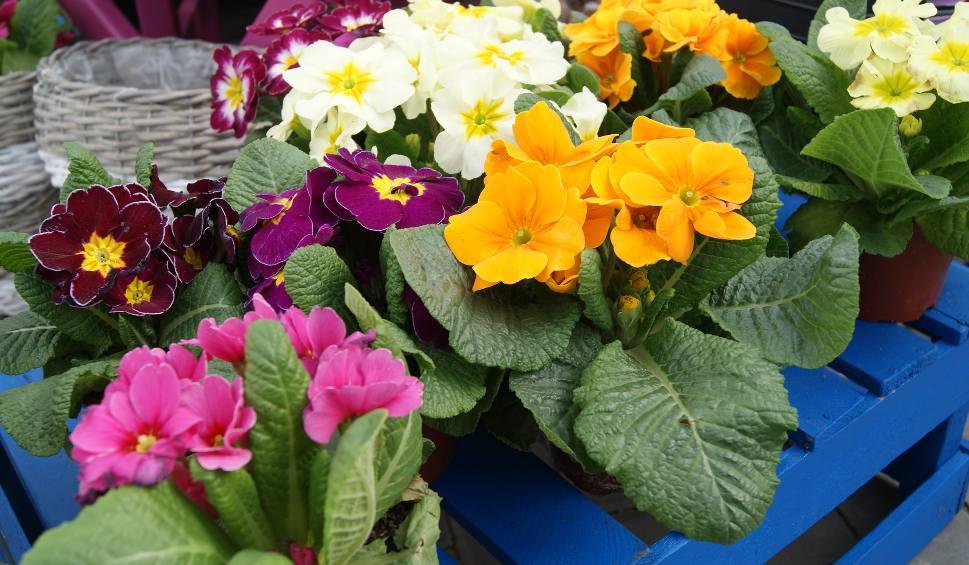 Film do artykułu: Jakie kwiaty sadzimy na wiosnę na balkonie? W kwietniu kwiatki szybko rosną