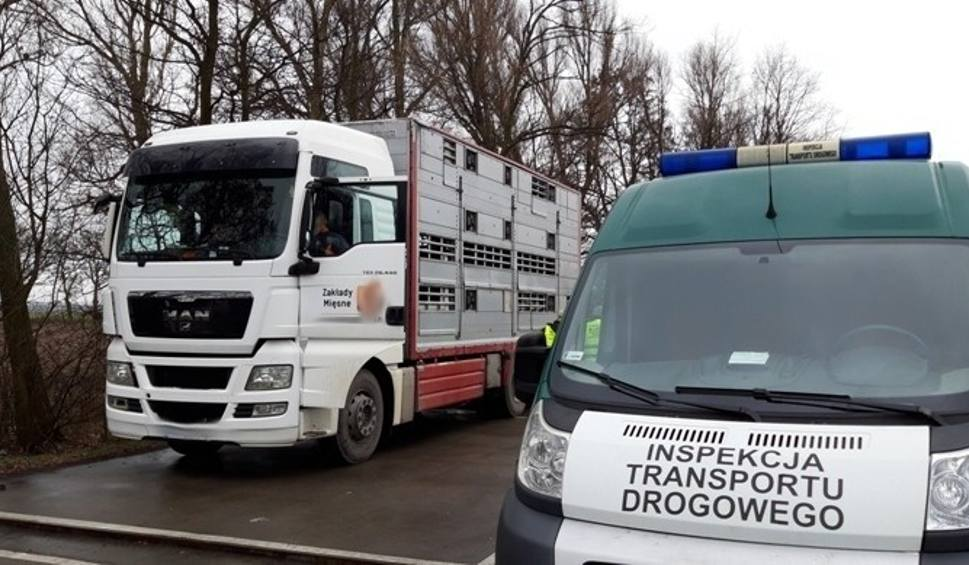 Film do artykułu: WITD w Bydgoszczy i weterynarze kontrolują przewóz mięsa. Jakie efekty?