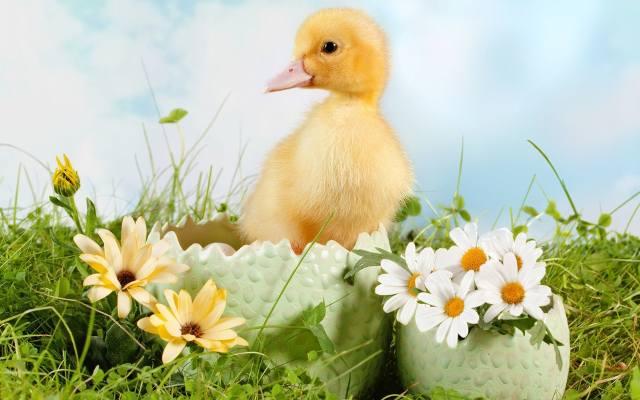 Wierszyki Na Wielkanoc Wspolczesnapl