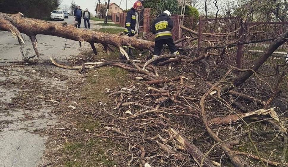 Film do artykułu: Powalone przez silny wiatr drzewo uszkodziło ogrodzenie i słup telekomunikacyjny w Leśnicy w gminie Małogoszcz