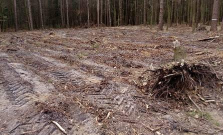 Gdzieniegdzie lasy zostały zniszczone doszczętnie.