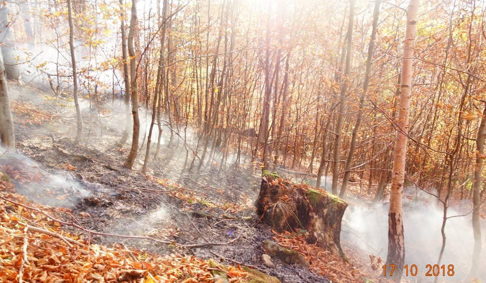 Film do artykułu: Groźny pożar lasu w Bieszczadach. Ogień zaprószyli biwakowicze? [ZDJĘCIA]