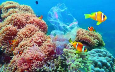 Plastikowy świat, czyli jak żyć w zgodzie z ekologią