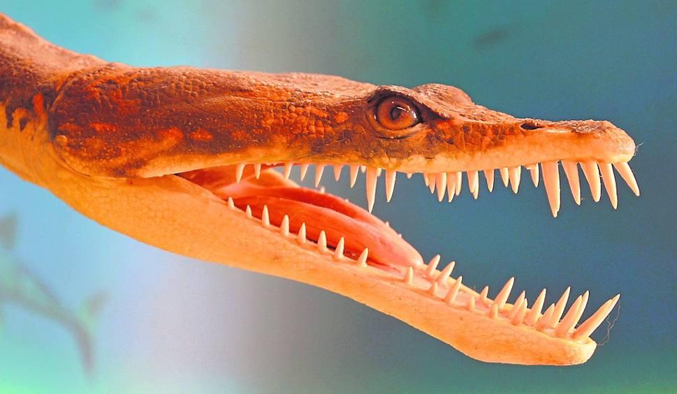 Film do artykułu: Pistozaury też miewały problemy ze zdrowiem. Badano ich szczątki m.in. z Tarnowskich Gór