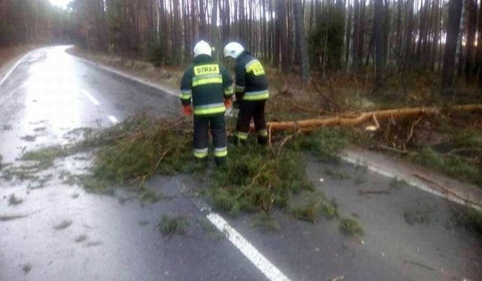 Film do artykułu: Nad regionem radomskim przeszła wichura. Połamane konary i uszkodzona linia energetyczna w wyniku podmuchów wiatru