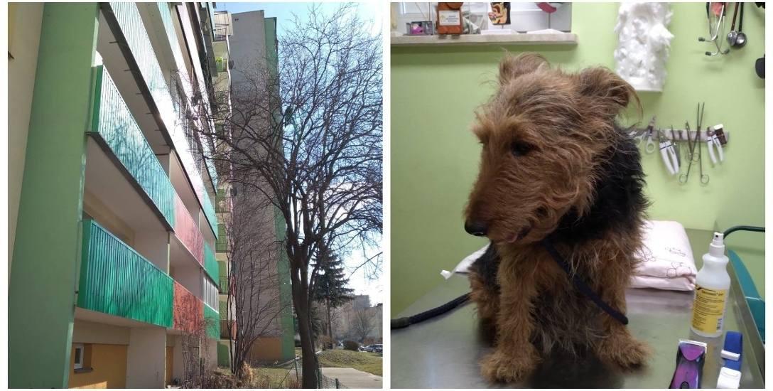 Suczka Nika, wyrzucona tydzień temu przez swego pana z balkonu na trzecim piętrze, cudem przeżyła. Prawdopodobnie dzięki świadkowi, który widział całe