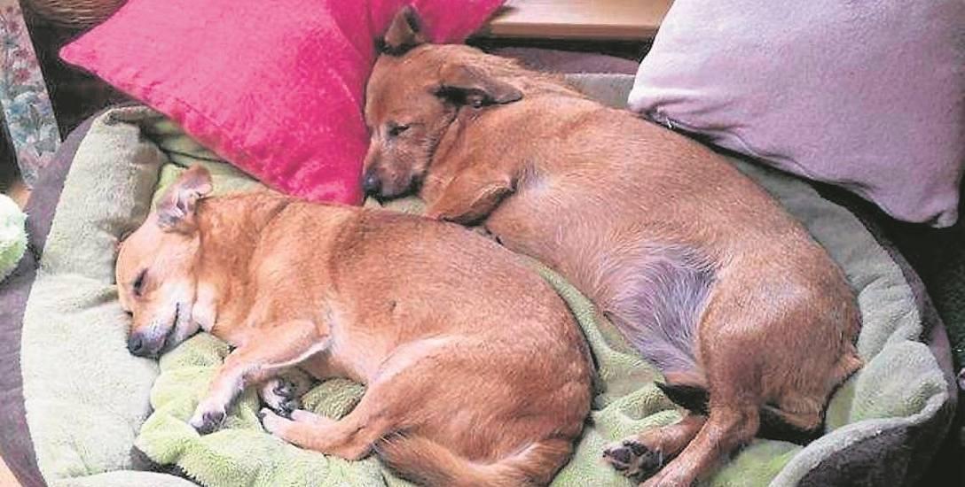 Maja i Kika bardzo się polubiły i śpią zgodnie na psim posłaniu