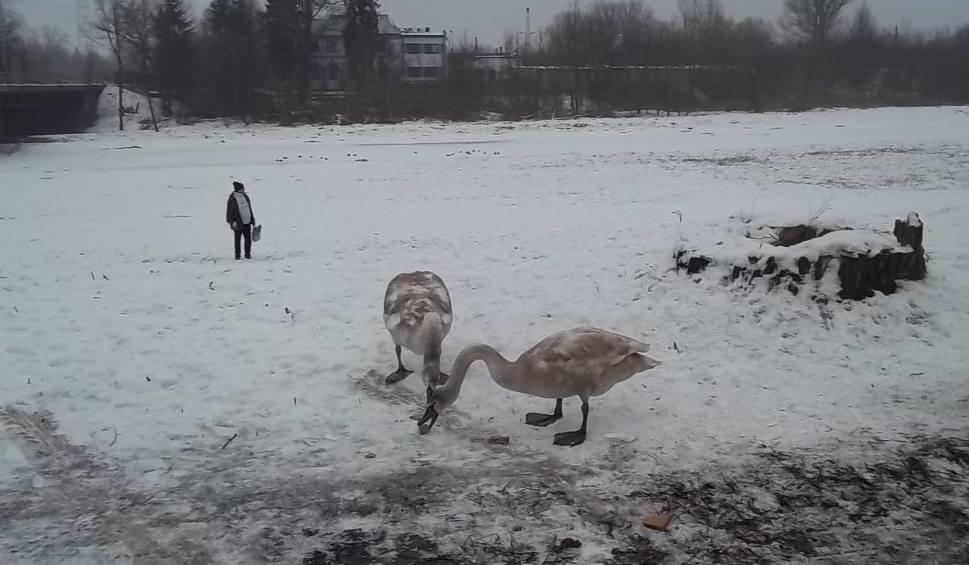 Film do artykułu: Ptasia grypa w Łódzkiem. W poniedziałek posiedzenie sztabu kryzysowego