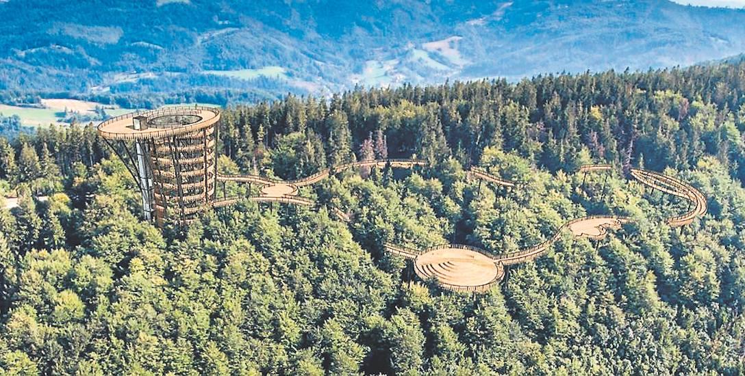 Spacer koronami drzew - taką atrakcję dla turystów chce przygotować kolej linowa Czantoria