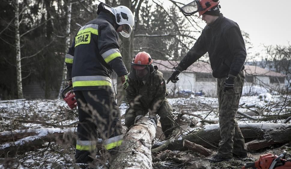 Film do artykułu: Lubelscy terytorialsi uczyli się posługiwania piłami spalinowymi oraz cięcia drzew (ZDJĘCIA)