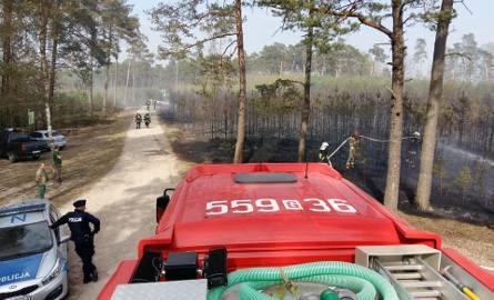 """Na miejscu z ogniem """"walczy"""" 10 zastępów straży pożarnej.- Pali się młodnik – informują strażacy."""