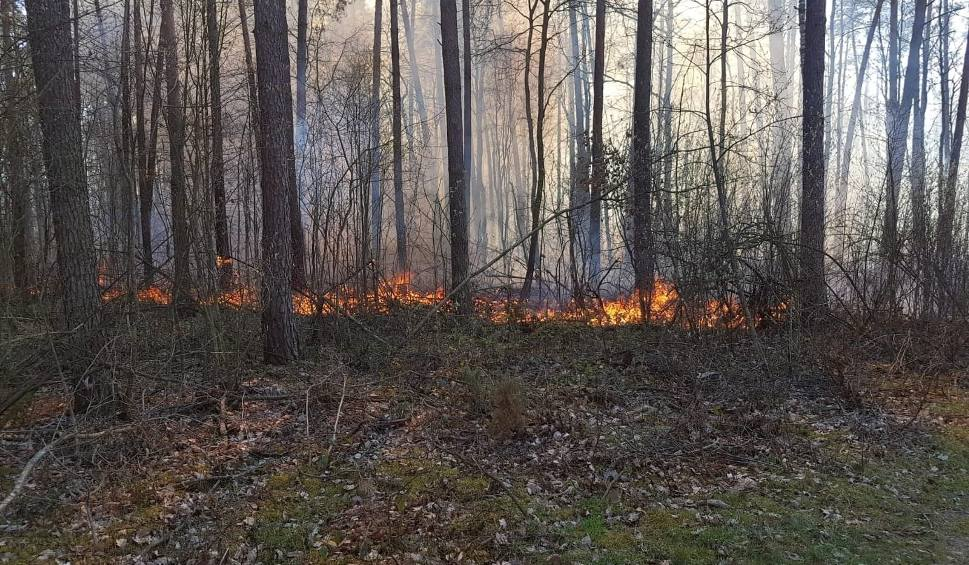 Film do artykułu: Wielki pożar w Puszczy Kozienickiej. W płomieniach stanęło 5 hektarów lasu. To było podpalenie? (zdjęcia, wideo)