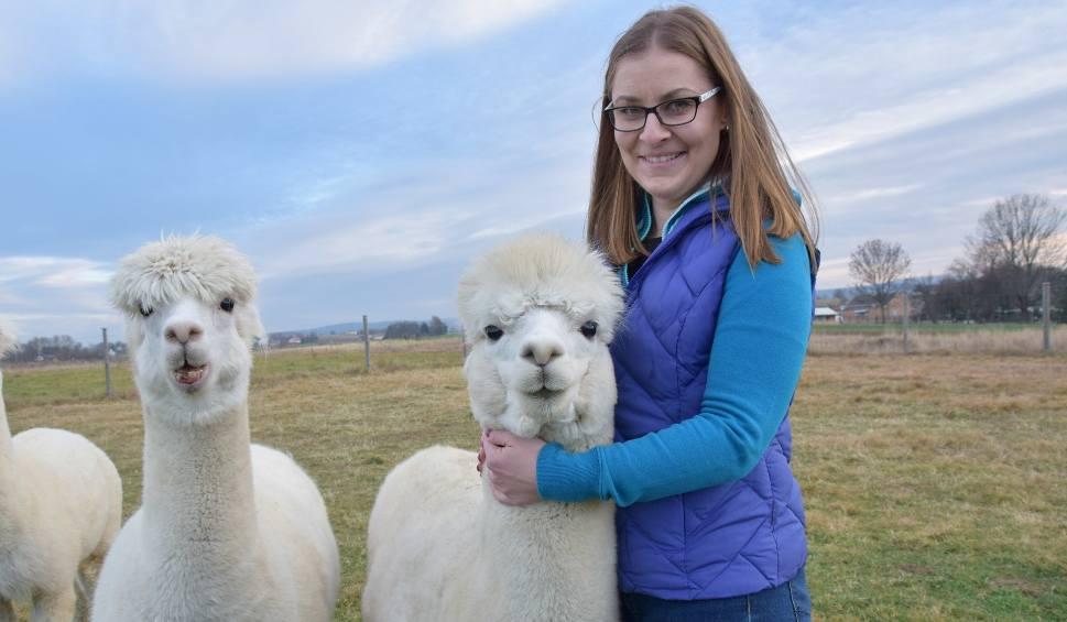Film do artykułu: Alpakom zima niestraszna. Szykują się na święta do roli głównej w żywej szopce
