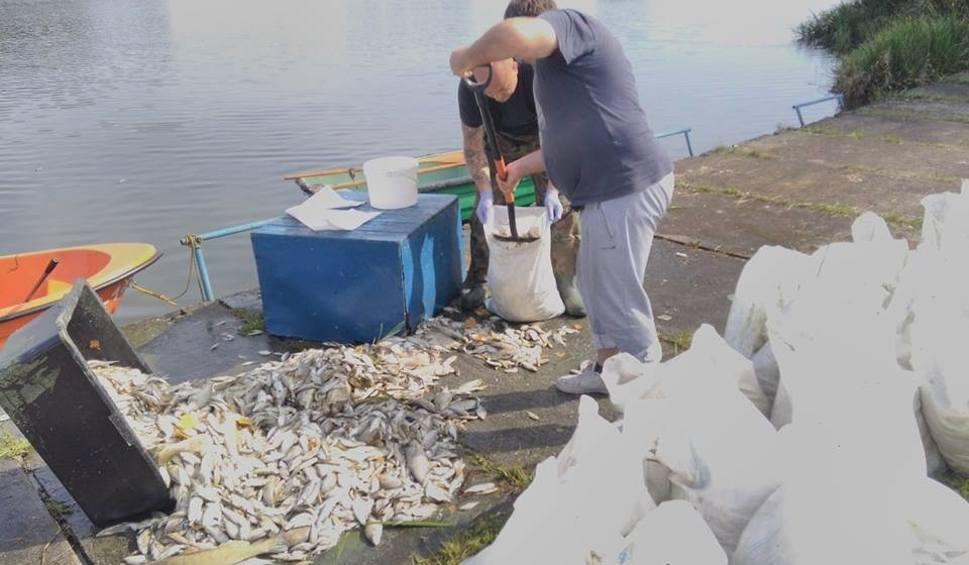 Film do artykułu: Wolbrom. Ryby w zalewie padały, bo w wodzie było za mało tlenu