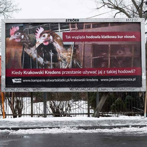 Obrońcy praw zwierząt walczą z Krakowskim Kredensem